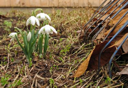 sse spring clean up - Spring Clean Ups SSE Landscape Contractors